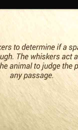 Amazing Animal Facts OFFLINE 2